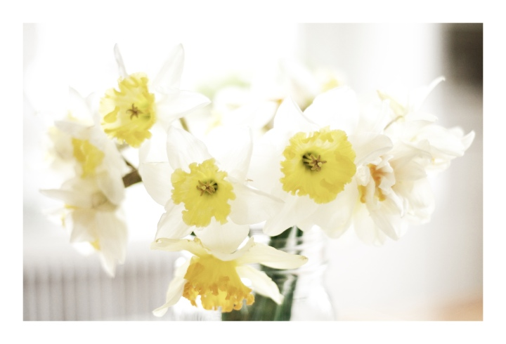 daffodils close-up_onthresholds