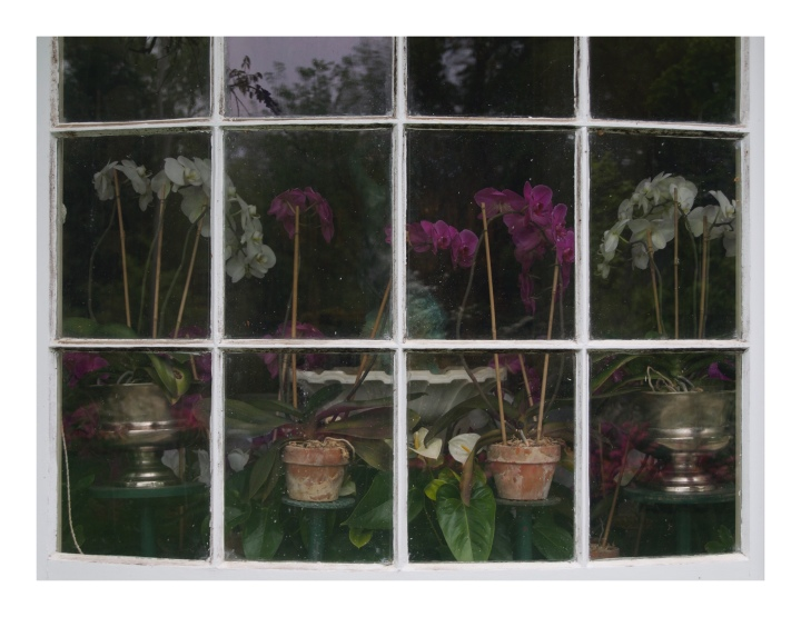 onthresholds_orchids in window