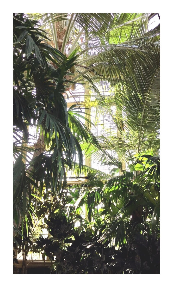 onthresholds_palm house_1