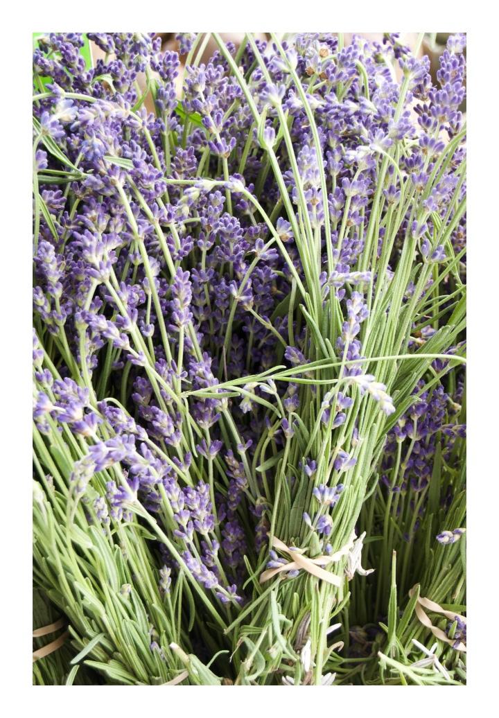 onthresholds_lavender bundles at farmers' market