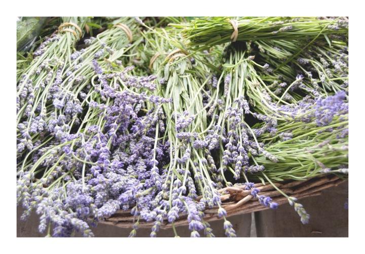 onthresholds_lavender in basket