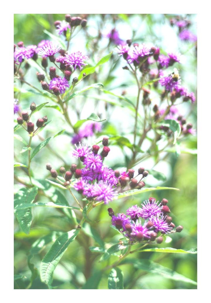 onthresholds_wildflowers 2IMG_3015