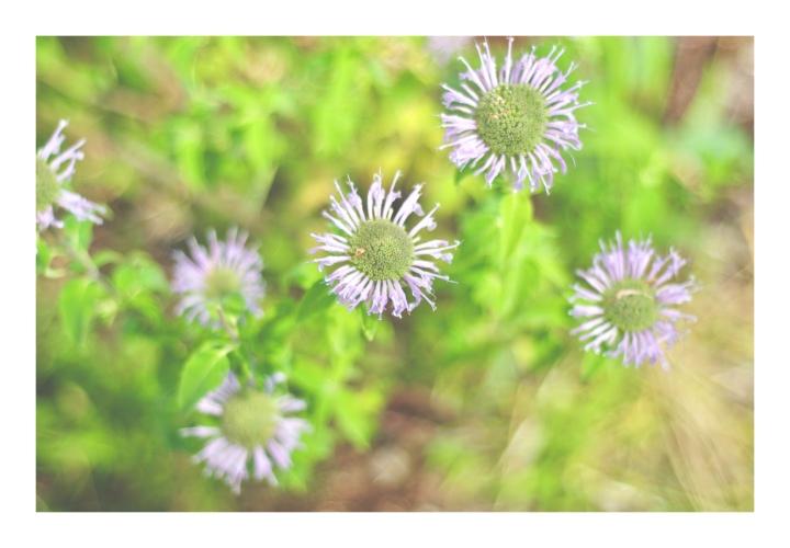 onthresholds_wildflowers 4IMG_3019