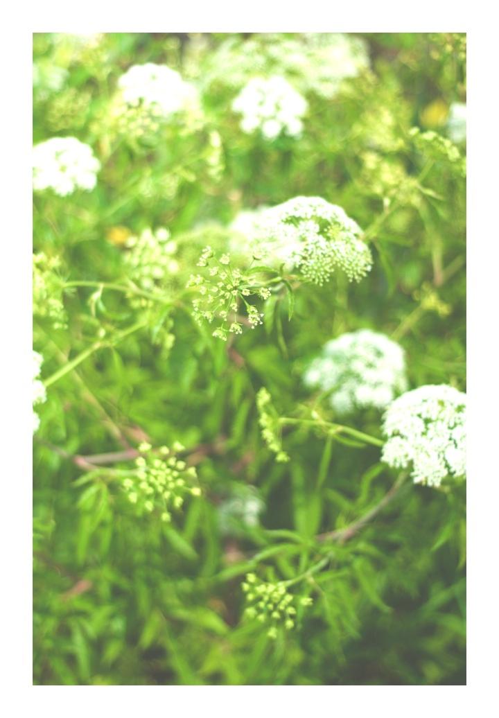 Onthresholds_wildflowers 6 IMG_3020