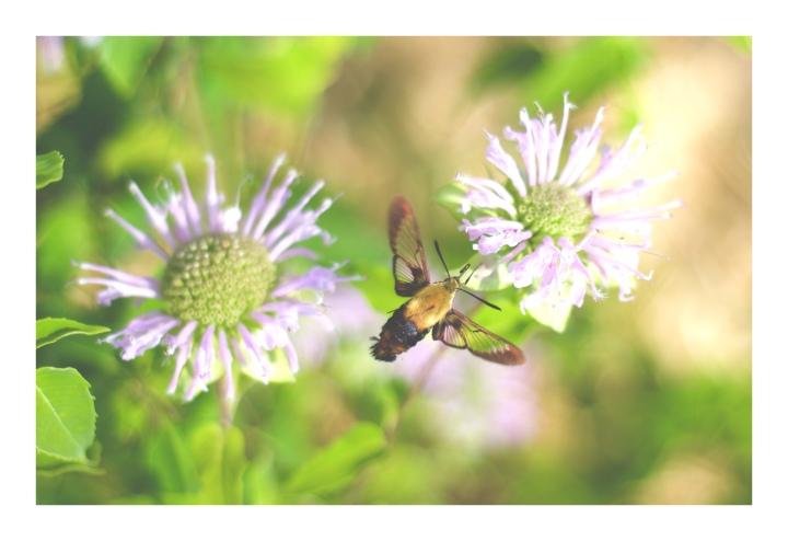 Onthresholds_wildflowers 7 IMG_3021