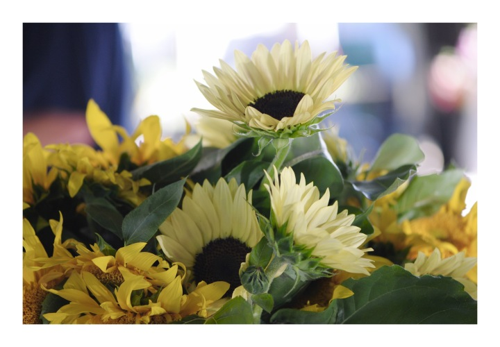 Onthresholds_sunflowers at farmers marketIMG_3062