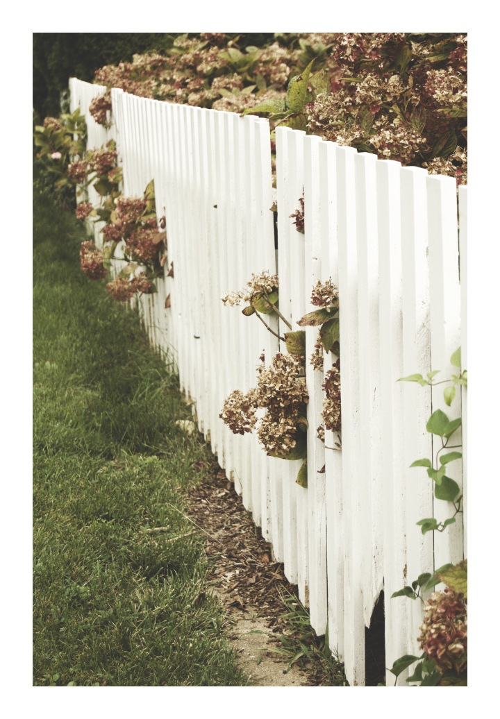 Onthresholds_hydrangeas and white fence_edgartownIMG_0049